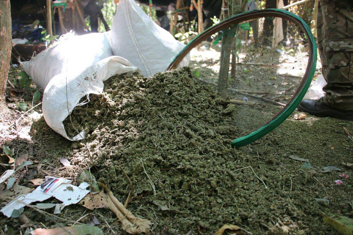 Destruyen 252 mil 800 kilos de marihuana en Amambay