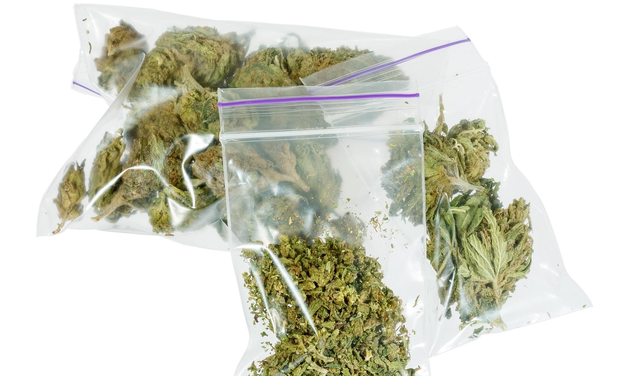 Eliminan más de 1400 toneladas de marihuana en 12 días