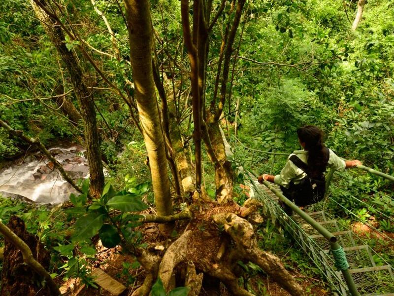 Reserva Natural del Bosque Mbaracayú fortalecerá promoción turística digital