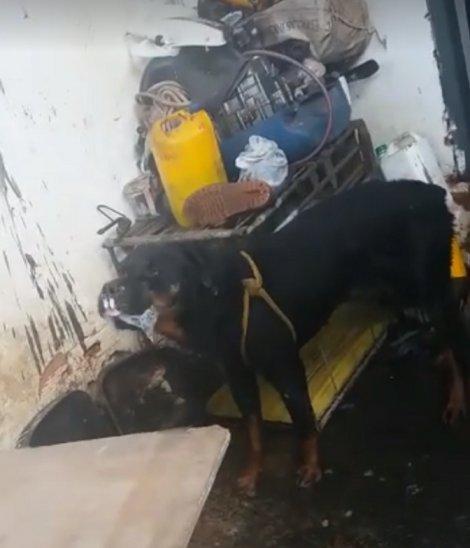 Rescatan a canes por una denuncia de maltrato