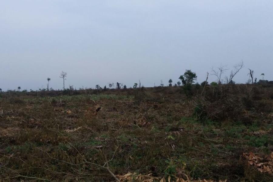 deforestación ÚH