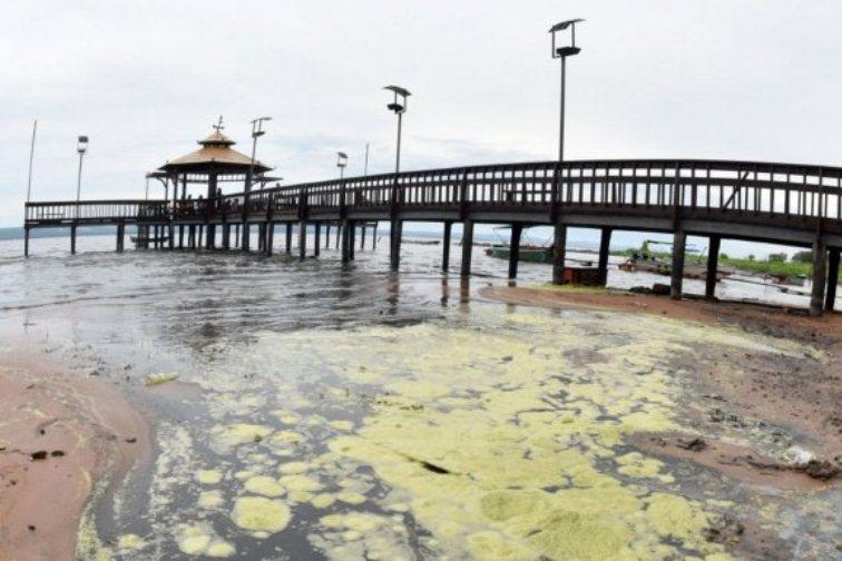 cianobacterias algas tóxicas lago ypacaraí 01 UH