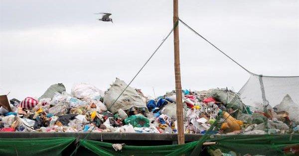 Encuentran 40 kilos de plástico dentro de una ballena muerta en Filipinas