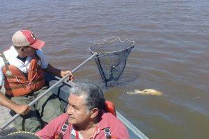 mortandad de peces Archivo MADES 02