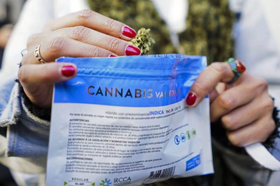 Venta de marihuana legal en Uruguay ISMORBO COM AP