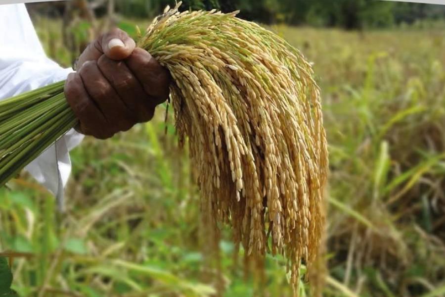 año agricola UGP campo deudas refinanciacion