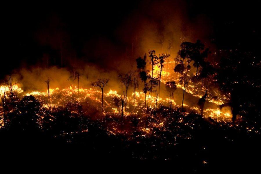 foco de incendio en la selva amazonica amazonas UOL GREENPEACE
