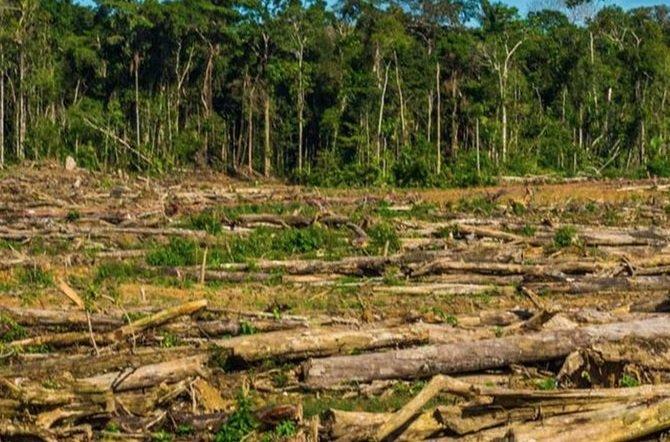 La Reserva Morombí hace un llamado a las autoridades contra la deforestación ilegal