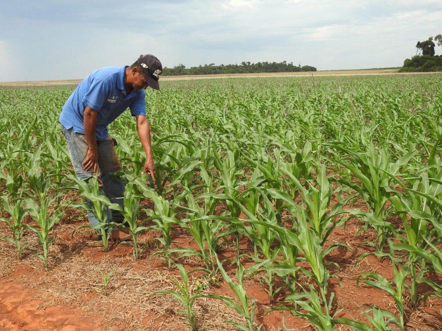 campo sequia agricultura familiar produccion campesinos IP ITAIPU