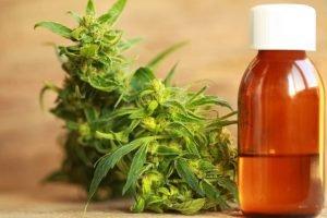 cannabis marihuana medicinal netdna-ssl COM