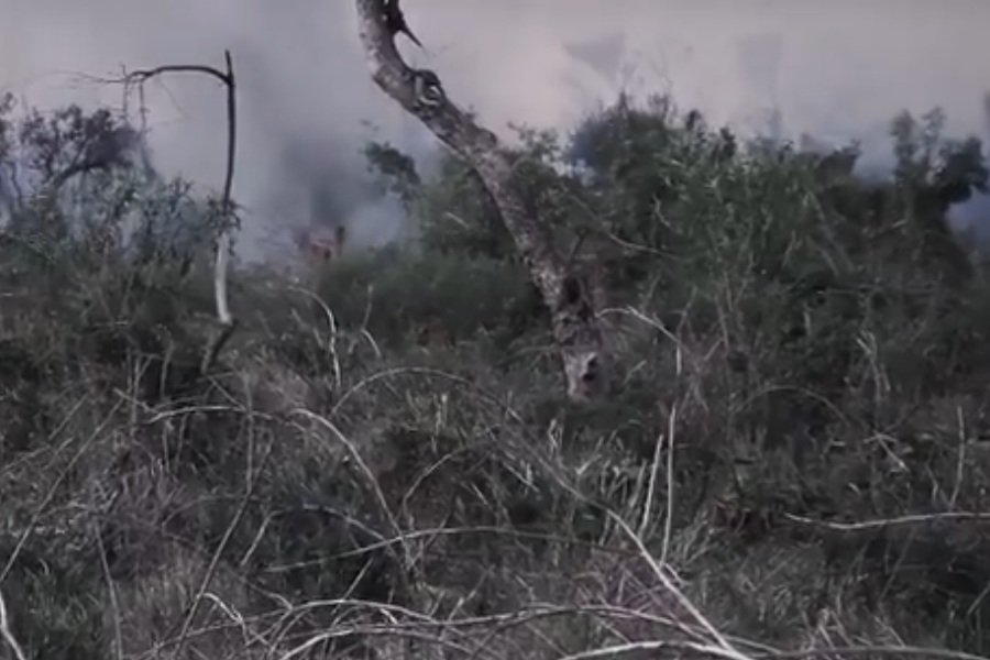 incendio forestal chaco SEN
