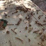 restos óseos en la que fuera la casa de veraneo del dictador stroessner