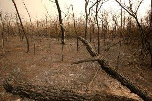 incendios chaco paraguayo fuego TW Jaguarete_PCJC