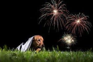 perros pirotecnia fuegos artificiales animales greensboro COM