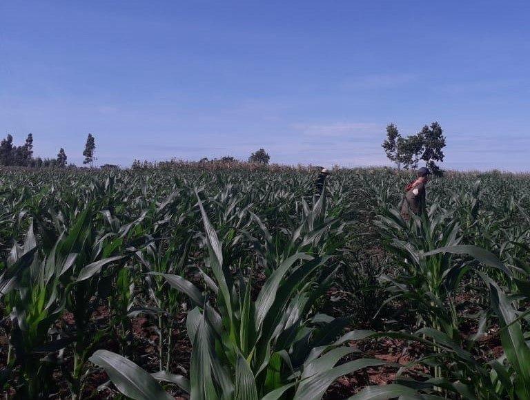 tierras paraguay malhabidas