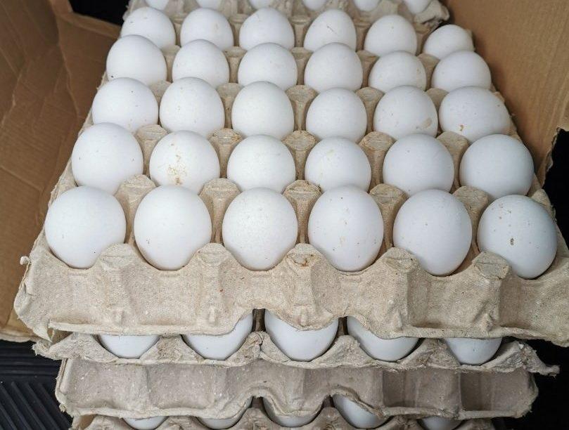 Huevos blancos gallina